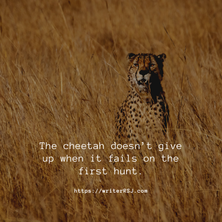 The cheetah doesn't give up when it fails on the first hunt.